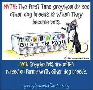 Other dog breeds