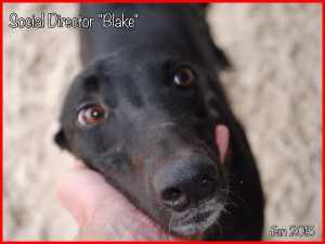 "Social Director ""Blake"""