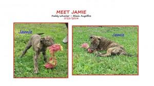 Meet Jamie