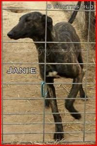 janie 2 1-10-15