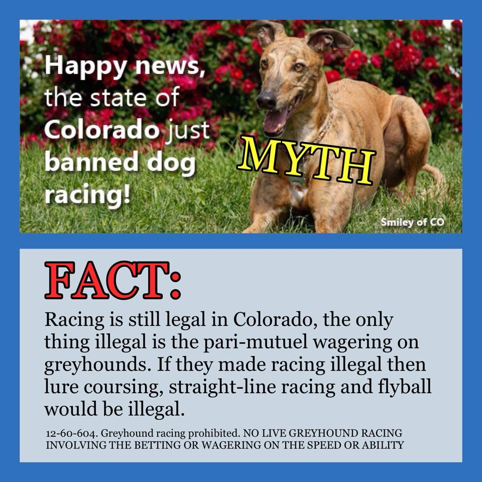 Myths Busted Greyhound Facts