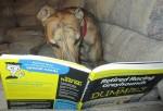 Lee Lee reading